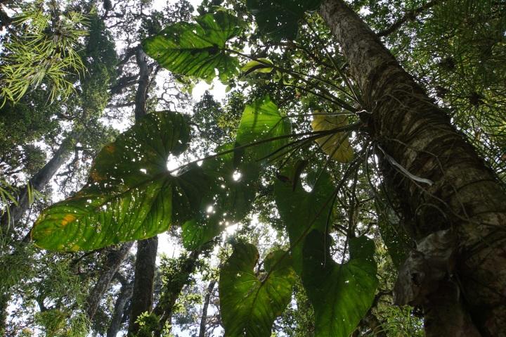 oak forest 7